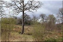 ST1897 : Pasture, Cwm Philkins, below Llys-pentwyn-uchaf by M J Roscoe