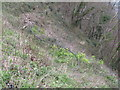 SX9265 : Overgrown cliff path below Babbacombe Downs by David Hawgood
