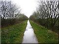 SJ8420 : Along the Way towards Newport by Richard Law