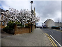 H4472 : Cherry tree blossoms, Omagh by Kenneth  Allen