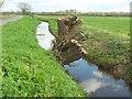ST4423 : Willow by Wetmoor Lane by Derek Harper
