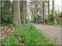 SD4615 : Bluebells, Rufford Old Hall garden by David Hawgood