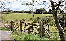 J3958 : Field gates, Saintfield (April 2016) by Albert Bridge