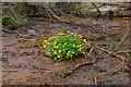 SU9353 : Marsh Marigold, Peat Moor Wood by Alan Hunt