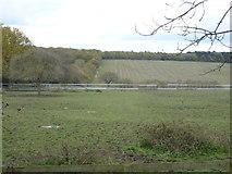 TQ2996 : Farmland South Lodge Farm by JThomas
