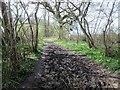 TQ1016 : Strawberry Lane by Peter Holmes