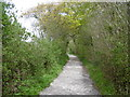 TR2261 : A path on Stodmarsh National Nature Reserve by Marathon