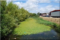 SU5902 : Moat around Fort Brockhurst (8) by Barry Shimmon