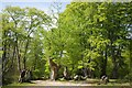TQ4098 : Path and Ancient Hornbeam by Glyn Baker
