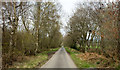 NY9556 : Road heading north through plantations by Trevor Littlewood