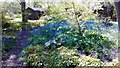 TM0527 : Bluebells at Green Island Gardens by PAUL FARMER
