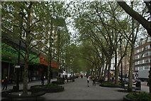 TQ3282 : View of an avenue of trees on Old Street by Robert Lamb