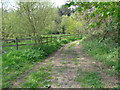 SO8166 : Footpaths diverge by Jeff Gogarty