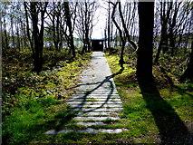 H5776 : Path, Altdrumman / Loughmacrory by Kenneth  Allen