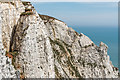TV5895 : Beachy Head cliffs by Ian Capper