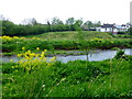 H4772 : Riverbank at Cranny by Kenneth  Allen