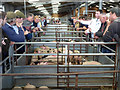 SU0797 : Auctioning piglets, Cirencester Livestock Market, Cotswold Agricultural Centre by Vieve Forward