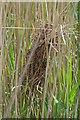 TL8604 : Reed Dwellers Nest by Glyn Baker