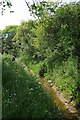 TL8501 : Stream Beside a Byway by Glyn Baker