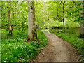 NY2621 : Footpath near to Great Wood by Trevor Littlewood