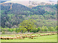 NY2823 : Field with rushes near to Keswick by Trevor Littlewood