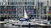 J3475 : Belfast Harbour Marina (May 2016) by Albert Bridge