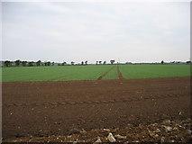 X1878 : Farmland near Ardmore by David Purchase