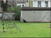 SX9164 : Dog defecating in children's playground, Upton Park by Derek Harper