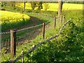 SK8512 : Belt and braces (or rather hedge and fence) by Alan Murray-Rust