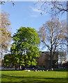 TQ3178 : St Mary's Churchyard, Elephant and Castle by PAUL FARMER