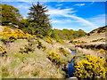 NZ9101 : Biller Howe Dale by Scott Robinson