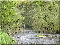 SK1272 : The River Wye. by steven ruffles