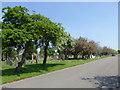 SJ3693 : Anfield Cemetery by Eirian Evans