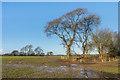 TR2741 : Field edge by Ian Capper