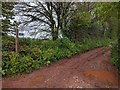 ST0108 : Bridleway heading for Cullompton by Rob Purvis