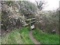 SJ4867 : Footbridge near Tarvin by Dave Dunford