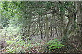 ST1997 : Hillside woodland, north of Cyncoed Farm by M J Roscoe