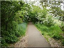 TQ1469 : Bushy Park - Footpath from High Street Hampton Hill by James Emmans