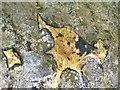 SM8433 : Carreg Samson Detail by Alan Hughes