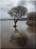 SS7981 : Kenfig Pool by BARRIE TRIGG