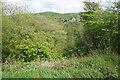 SK1773 : View across Cressbrook Dale by Bill Boaden