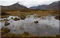 NG5727 : Bog south of Am Meall by Ian Taylor