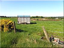 H5575 : Horse trailer, Streefe Glebe by Kenneth  Allen