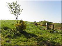 H5575 : Gate, Streefe Glebe by Kenneth  Allen