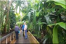 TQ1876 : Interior of the Palm House, Kew Gardens by Jim Barton