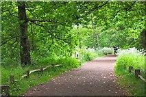 TQ1776 : Woodland path, Kew Gardens by Jim Barton