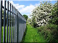 SK3716 : Fence and May blossom by Coleorton Brook by Ian Calderwood