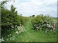 NY3360 : Overgrown farm track by JThomas