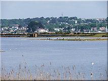 SZ0287 : Brownsea Island Lagoon by David Dixon