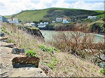 SW9980 : Looking SW across the harbour from the Coast Path, Port Isaac by Derek Voller